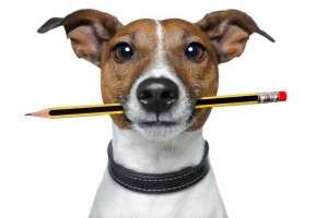dogwithpencil